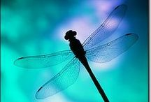 Dragonflies / Dragonflies have flown the earth for over 300 million years! No wonder they are regarded as symbols of our overcoming hardship, and in many countries, of luck. There remains something mystical and dream-like about the dragonfly.