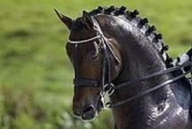 Horses / equestrian