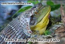 Wild life videos / Sanctuariesindia: Here you can get all Animals Video, Animals Videos, Wild Videos, Wild life videos, wild animals fighting video