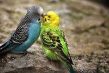 Vogels / Alles over vogels