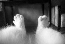 animals / by Selena