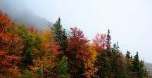 Maine Roots / Good ole Pine Tree State