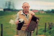 Včela najlepší priateľ človeka