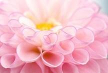 Inspiring Images - Floral (Plants)