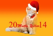 Kedi Özledi | Özel Çalışmalar / Kedi Özledi özel çalışmalar