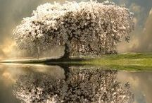 Amazing Nature: Forests and Trees