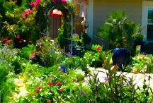 Butterfly Gardening and butterflies / Different ideas and flowers for a garden that attracts butterflies and feels like a vacation retreat. / by Patty Fitts