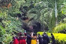 Outdoor/Indoor Wedding / Gardens