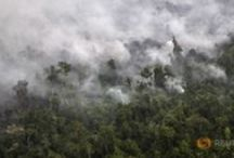 Indonesia's Forests