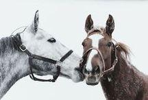 horselove / by Iida Raikamo