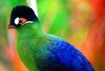 Birds - Our Avian Friends / by Dianne Ward