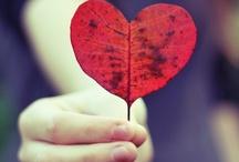 Coeurs / Hearts / Le coeur dans tous ses états