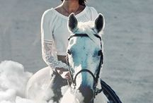 """""""horses lend us the wings we lack..."""" / """"Horses lend us the wings we lack""""-unknown / by Mandy Nicole"""