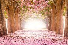 Beautiful Nature / Nature I am drawn to