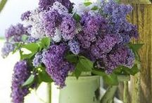 lilac cottage / Romantic, shabby, vintage, and cottage style. Surrounded by lilacs and lavender.  / by Deanna