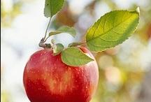 adorável fruto do pecado