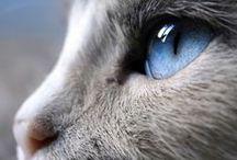 O mistério dos felinos / Miau :-)