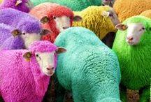 Todas  as cores do arco-íris