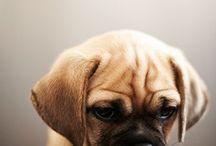 Dogs / .Kutyák.