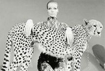 FELINES / We Love Leopard Spots and Cheetah Spots
