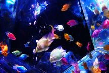 Aquariums / Something about fish, and the set up of the aquariums. The combinations has a calming effect. / by Jac NcourageU