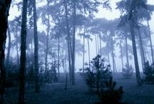 Magic forest and landscapes / ...