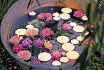 Flowers / Rare Flowers, Flower Names, Flower Gardens, How to Grow Flowers, Flower Art, Caring For Flowers
