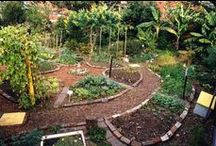 Permaculture Gardening / how to set up your garden to produce endless years of food with very little care.