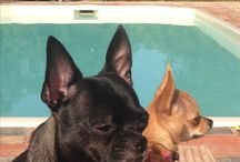 Kids / #tommy #loupee #carminho #mafaldinha #leo #pug #pomerania #chihuahua #black #hazel #dog #cat #cães #cão #animals #love #carmo #mafalda #louis  #quincas
