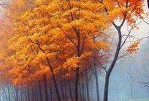 ☔ FALL time ☕ / autumn colours beauty