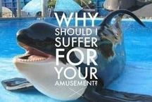End Cetacean Captivity / When your home is the entire ocean, a tank is a jail cell