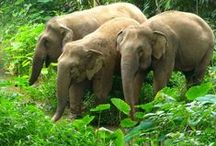 End Elephant Tourism / Get lost in the world of elephants - ethically!