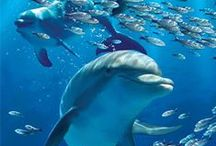 Cetaceans - Safe, Wild, Free / Whales, dolphins and porpoises living how they should - wild, free, happy and safe from all harm