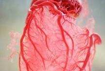 anatomie écoeurée