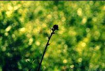 Valokuvaus/ Photography / Itse etsimen läpi nähtyä. Sony A77 & A55