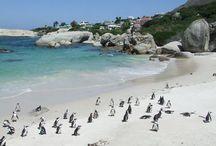 Cape Town Varsity Living.