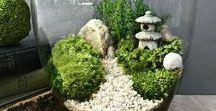 jardin de fée / terrarium végétal