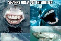 Teeth Funnies / by Floss&Brush