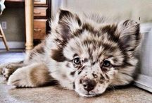 Cute! / The cutest puppies!