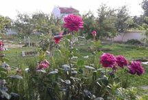 Organik bahçem / Organik yetiştirdiğimiz sebzeler,meyveler ve onlara eşlik eden çiçeklerimiz