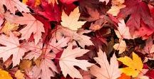 Thema 'Fall' Alles wat helemaal herfst is! / Hou jij ook zo van de herfst? Lekker warm onder een deken met een kopje thee een film kijken.. Deze sfeerbord gaat daar over, wees geïnspireerd!