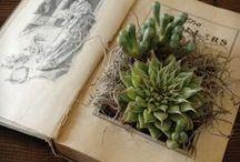 PlantsnStuff / by Liz Hanstad