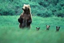 Bears&co.