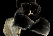 Black Beauty! / Couleur du mystère, maléfices et renoncement. Le noir symbole du temps est perçu comme le monde des origines et du germe de toute vie!