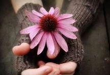 Peaceful P!nK! / Couleur d'un amour permanent plus que passionné, couleur de la compassion, de la tendresse, de la douceur, de l'amitié!