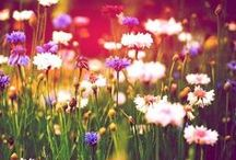 All things beautiful<3