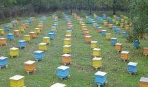 Apicultura / Sitio para difundir la apicultura y la bondad de los productos de la colmena. Site to disseminate beekeeping and goodness of bee products.