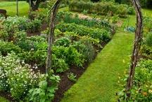 Gardening Dreams / by Julie Wyatt
