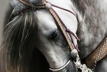 Horses / by Susan Pletscher