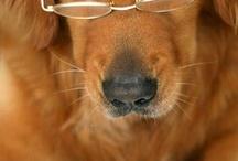 Furry Best Friends / by Susan Pletscher